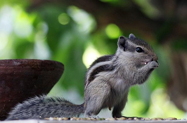 Squirrells